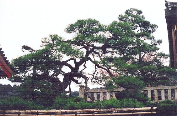 Nara'dan tablo gibi bir manzara.