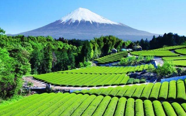 Fuji Dağı eteklerinde çay bahçeleri.
