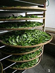 Lapsang Souchong tahta tepsilerde tütsülenmeyi bekliyor. Fotoğraf:www.biriz.biz
