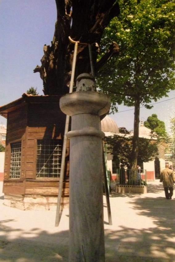 İstanbul Kocamustafapaşa'da Sümbülefendi Camii'nin avlusundaki 1300 yaşında olduğu tahmin edilen selvi, şehrin en yaşlı ağaçlarından biri. Ağacı koruyabilmek için dalının altına demir destekler konmuş. Fotoğrafta önde ise kuş sebili görülüyor.