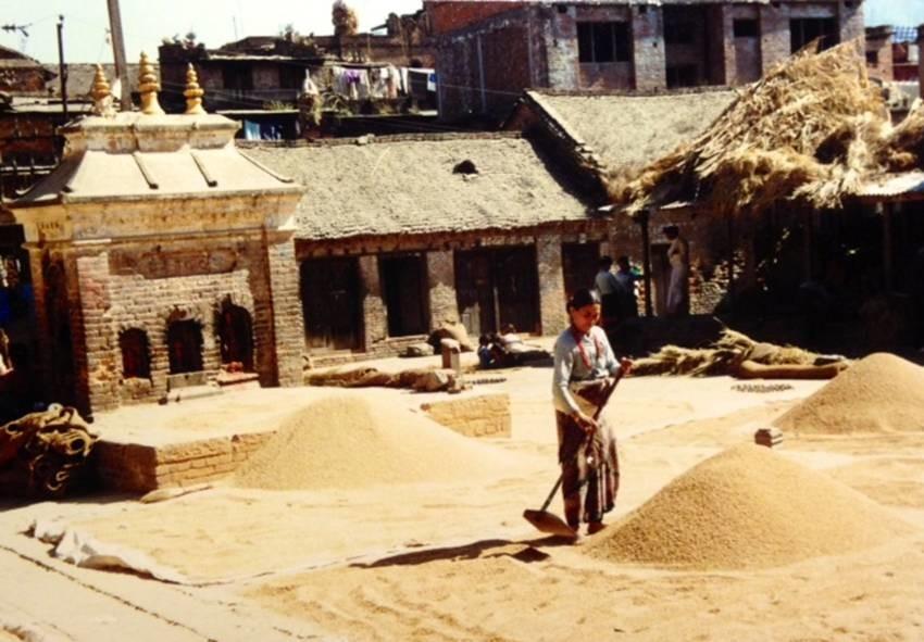 Nepal'in Bhagdaon kentinde ürününü güneşte kurutmaya çalışan bir kadın.
