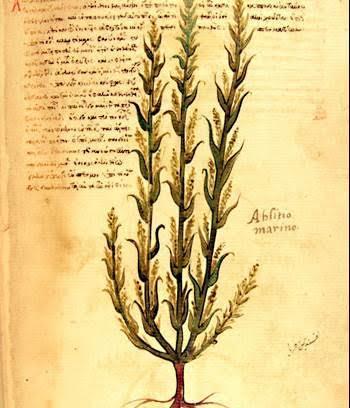 De Materia Medica'nın birçok elyazması çok yüksek kalitede resimler içerir. Ancak günümüze ulaşmayan özgün kopyanın resimli olmadığı, resimlerin sadece belli elyazmalarına eklendiği düşünülüyor. Fotoğraf:www.history.com