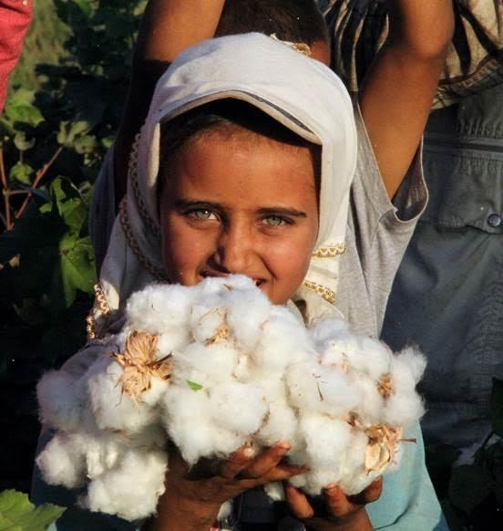 Çocukların okul yerine hasatta ırgat olarak çalıştırılması Özbekistan'a özgü bir uygulama değil. Aradaki fark oradakinin devlet zoruyla yapılıyor olması. Fotoğraf:istanbulgazetesi.com.tr