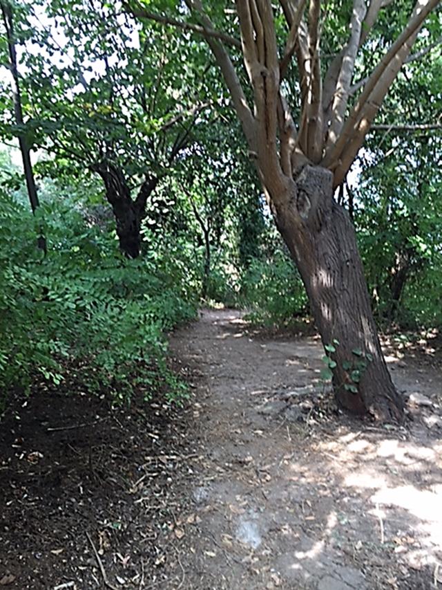 Yanaros Köşkü'nün eğimli, denizle kavuşan bahçesi de bakımsız; yabani bitkilerle, şimdiki görevlinin yetiştirdiği bitkilerle kaplı. Fotoğraf: Füsun Kavrakoğlu
