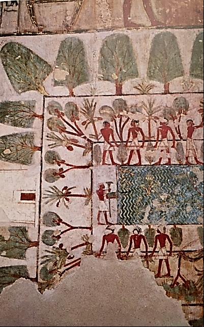 Mısır evinin en önemli parçalarından biri bahçeydi ve mutlaka bir havuzu olmalıydı. Bir mezar resminde havuzun etrafında çiçekli bitkiler, bir sıra meyve ağaçları, bir sıra da gölge yapan ağaçlar bulunurdu. Fotoğraf: Art and History of Egypt, Alberto Carlo Carpiceci, Casa Editrice Bonechi, 1994.