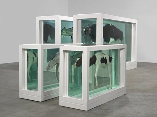 Mother and Child Divided, Damien Hirst, 1993. Cam, silikon, inek, buzağı, formaldehit çözeltisi. Sanatçı her zaman ölüm, hayat, sanat, aşk, gerçek gibi büyük temaları seçmiştir. Hirst ölü hayvanları, parçalanmış veya tam olarak kullandığı birçok eser üretmiştir. Bu eserler, kendi ifadesine göre, insanları memento mori'ye (ölümü hatırla) karşı daha vurdumduymaz kılmayı amaçlamaktadır. Fotoğraf:www.damienhirst.com