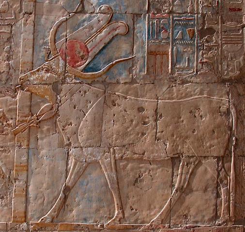 Luxor'daki Hatshepsut Tapınağı'nda yer alan Apis kabartması, Mısır. Fotoğraf: LookLex