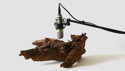 Zimoun'un 2009 yılında 25 adet ağaç kurdu, ağaç parçası, mikrofon ve ses sistemi ile yarattığı ses heykelinin görüntüsü. Zi¬mo¬un, San Francisco'daki bir ser¬gi¬si¬nin içe¬ri¬ği¬ni oluştur¬ma¬dan ön¬ce Zü¬rih Üni¬ver¬si¬te¬si Ya¬pay Ze¬kâ La¬bo¬ra¬tu¬va¬rı'nda, Lo¬zan Üni¬ver¬si¬te¬si Eko¬lo¬ji ve Ev¬rim bö¬lü¬mün¬de ka¬rın¬ca¬la¬rın dav¬ra¬nış¬la¬rı¬nı in¬ce¬le-miş. Fotoğraf:zimoun.net