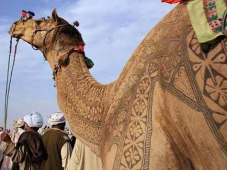 Hindistan'da develere de dövme yapılabiliyor. Fotoğraf: En Son Haber